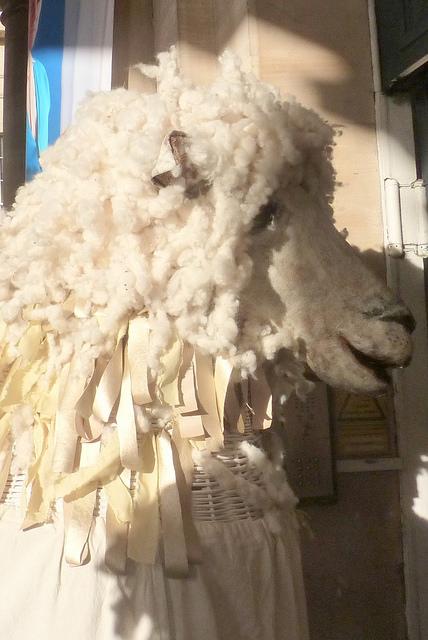 Is it a lion? Is it a sheep? Perhaps it's a bit of both. (Photo (c) Mike Finn)